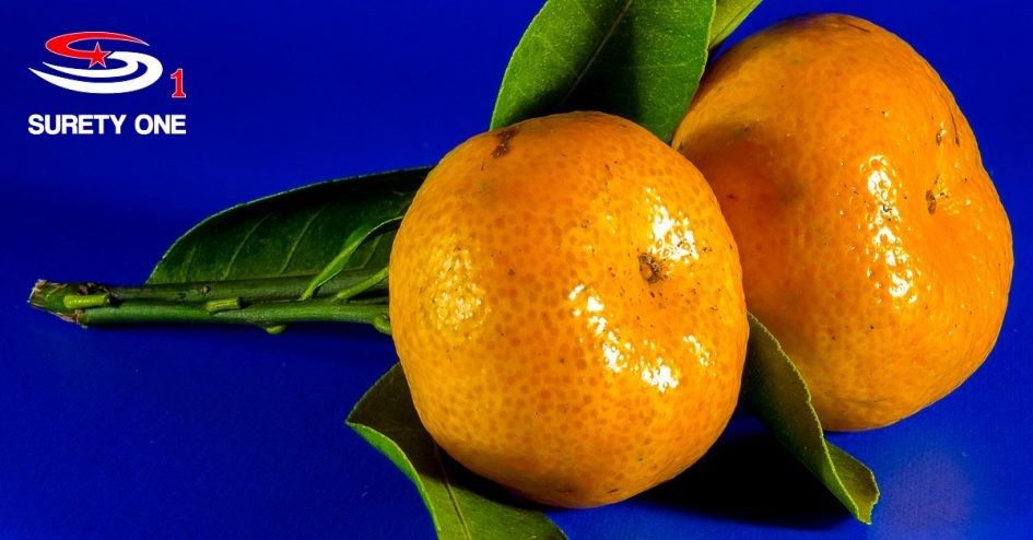 citrus fruit dealer bond, citrus fruit dealer surety bond, citrus fruit dealer surety bonds, citrus fruit dealer bonds, florida citrust fruit dealer bond, florida citrus fruit dealer surety bond, Surety One, surety bond, surety bonds, Puerto Rico, Florida, United States, florida citrus fruit dealer bond, floridia citrus fruit dealer surety bond